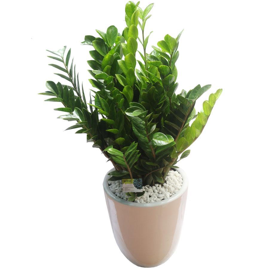 5 loại cây phong thủy thích hợp trồng trong nhà